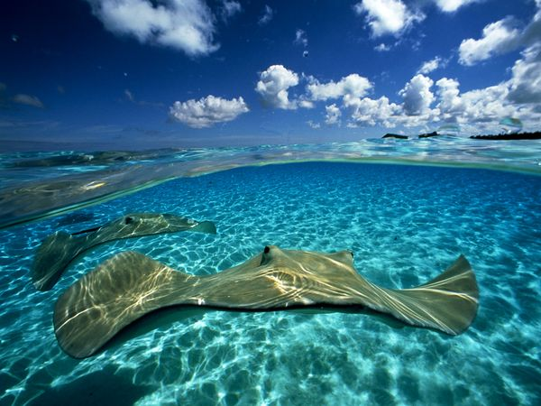 20 Beautiful photos of underwater creatures, underwater photos, beautiful creatures, underwater creatures, beautiful animal pictures, animal photography