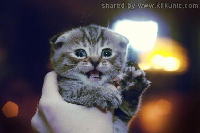 http://2.bp.blogspot.com/-bvEAUobZqS4/TXYHeWQokYI/AAAAAAAAQbY/YX64-wgvKAU/s1600/these_funny_animals_632_640_29.jpg