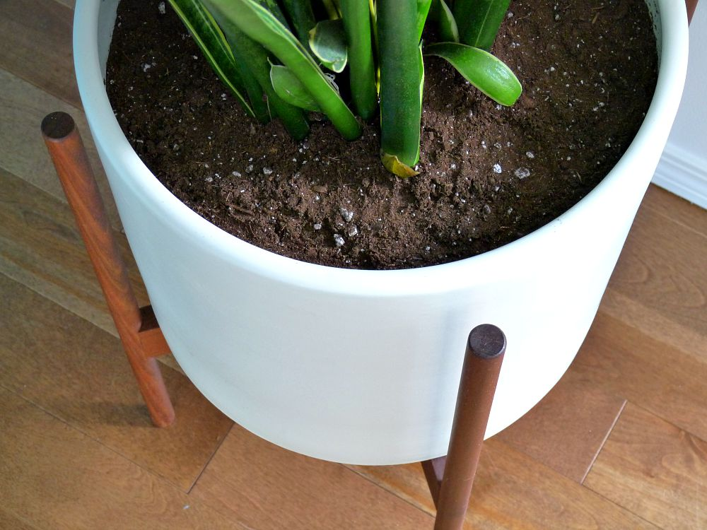 Case Study Cylinder Planter with Walnut Stand   Case study     Dimensions