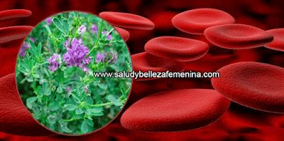 Remedios y tratamientos, salud