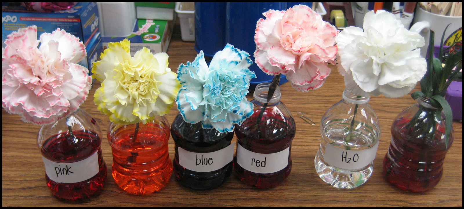 Kindergarten crayons what 39 s blooming in my room for Food coloring roses