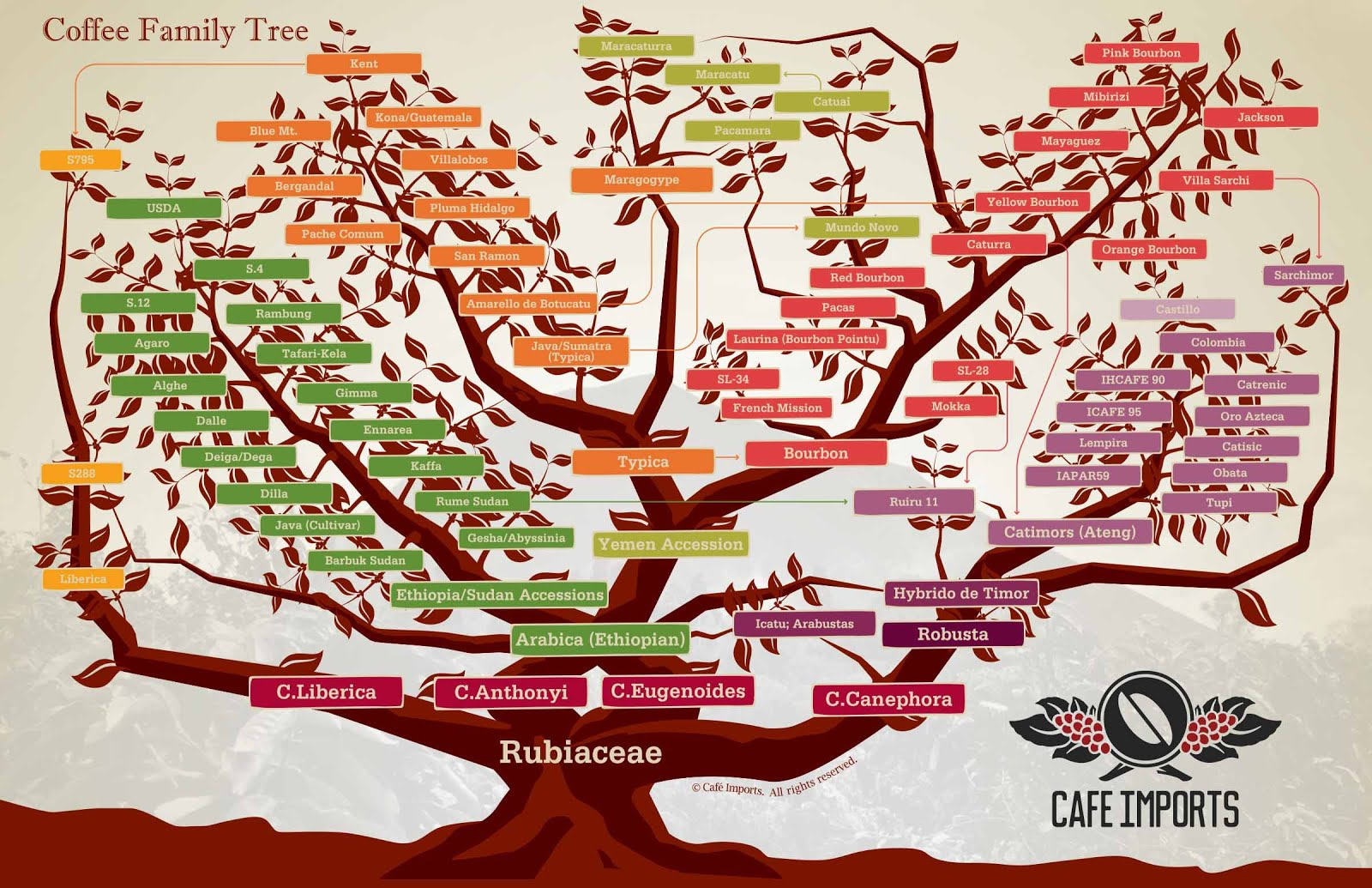 Coffee Blogers: The Anatomy Of A Coffee Tree