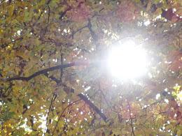 Sonne in den Blättern