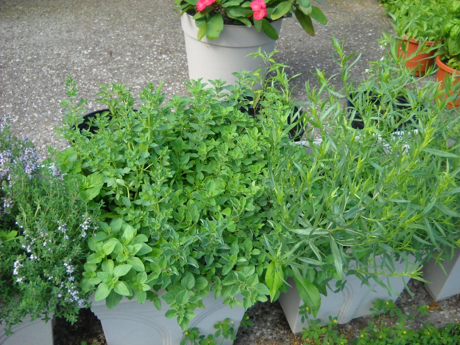 The Herb Garden My Square Foot Garden