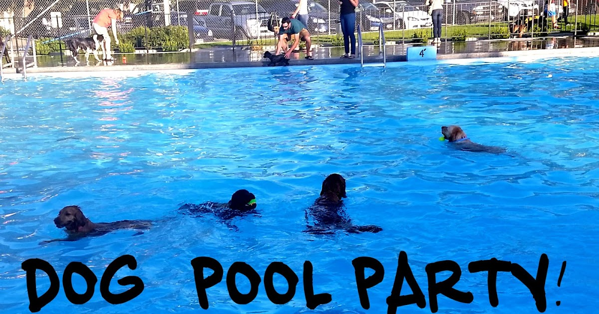 Life with lolo dog pool party for Life of pi swimming pool