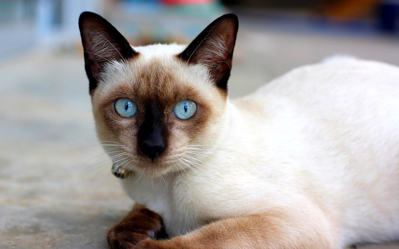 Кошка ходит в трап по имени майкл