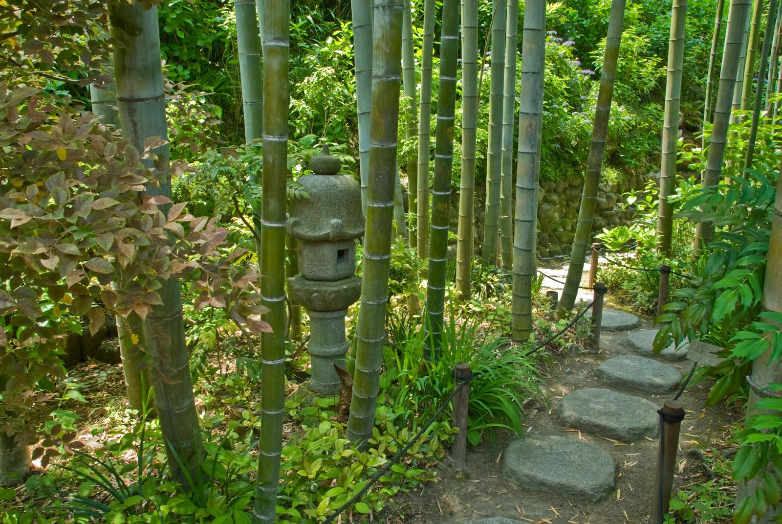 http://2.bp.blogspot.com/-bwbC-RJRqvs/T6ALUjrJfVI/AAAAAAAAPvE/7L9i5PlS3fE/s1600/Hasedera-Bamboo_Grove.jpg