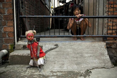 Performing Street Monkeys of Indonesia Seen On www.coolpicturegallery.us
