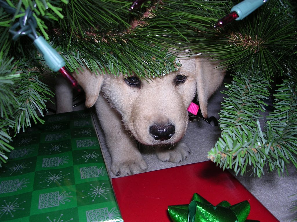 Frightened Puppy Under Christmas Tree