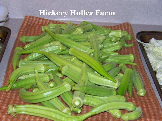 Hickery Holler Farm Blanching Okra And Freezing Breaded Okra
