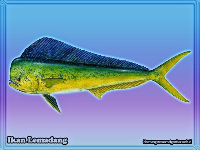 Ikan Lemadang
