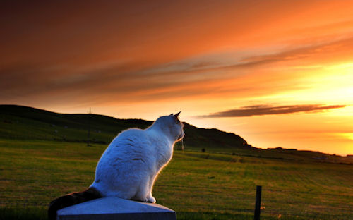 Gatito mirando el amanecer - Cat looking to sunset