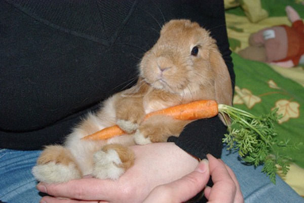bunny and carrot, funny animal pictures, animal photos, funny animals