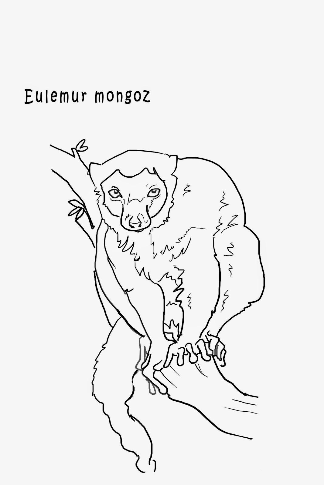 """<img src=""""Eulemur mongoz.jpg"""" alt=""""Lémures para colorear""""/>"""