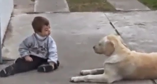 This Child Has Down's Syndrome – The Way This Dog Treats Him Will Surprise You
