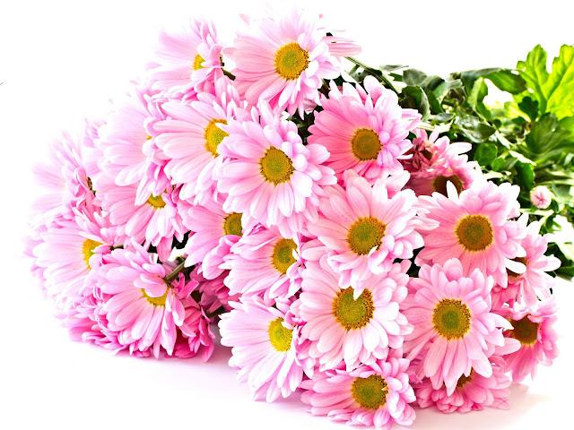 Hình ảnh hoa đẹp 20