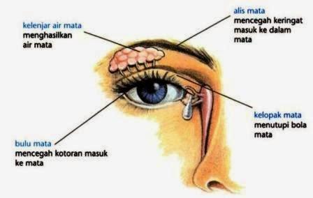 Fungsi Bagian Bagian Mata