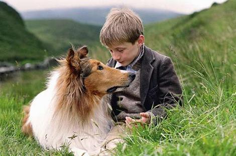 There are 11 lassie movies, more than 50 books and also tv series.