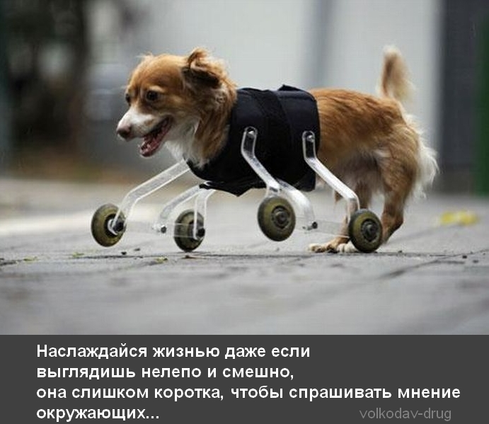 Людей то и демотиваторы про собак