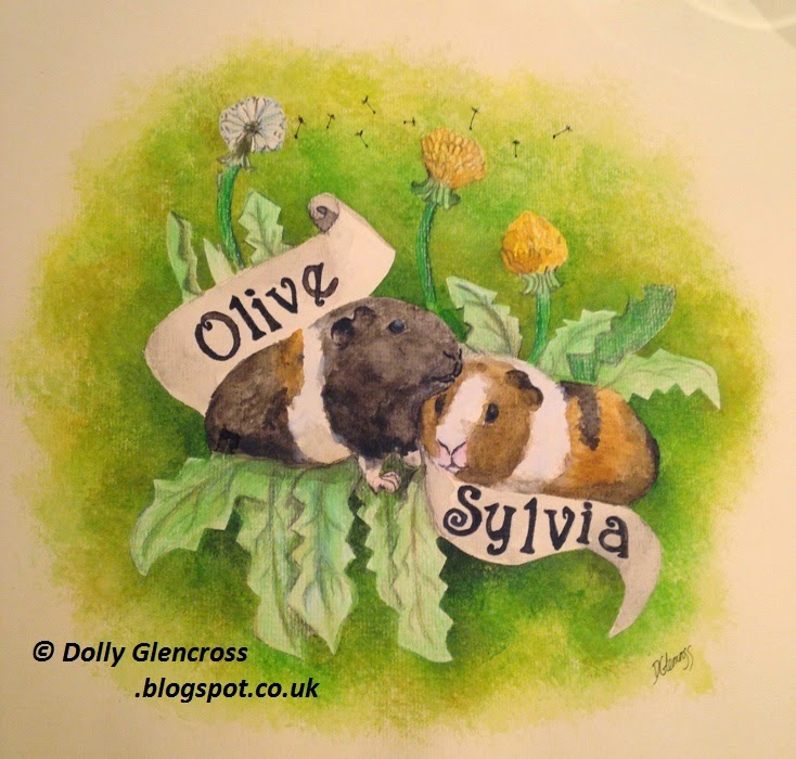 guinea pig watercolour and pencil drawing