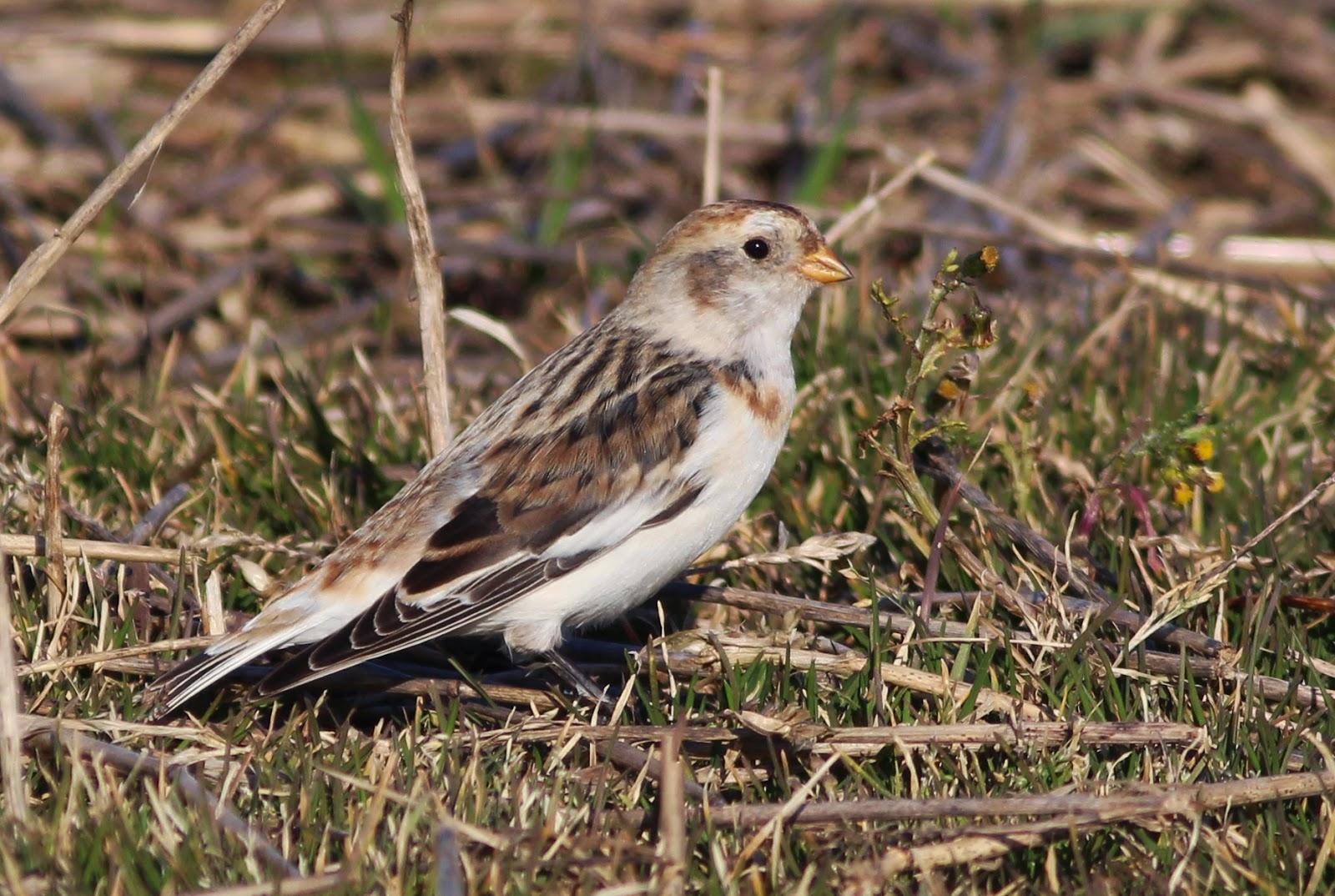 Bird Ringing Kent