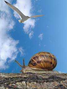 Vreau si eu sa zbor...
