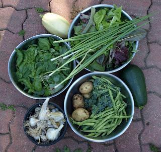 2011 Garden Harvests