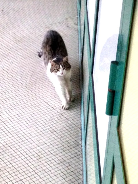Chat rencontre 01