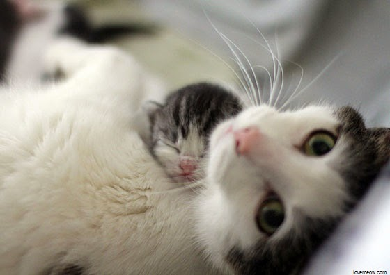 Maman Chat et son petit Chaton