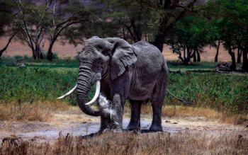 Serengeti - Elephant