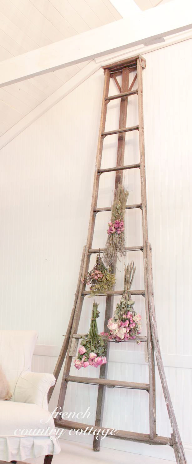 how to get rid of ladder fern