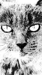 Lyran Feline