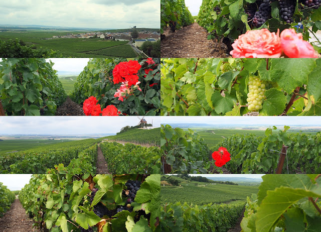 France, Champagne, Vinay