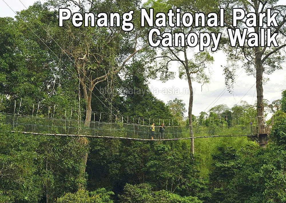 Penang National Park Tree Top Walk