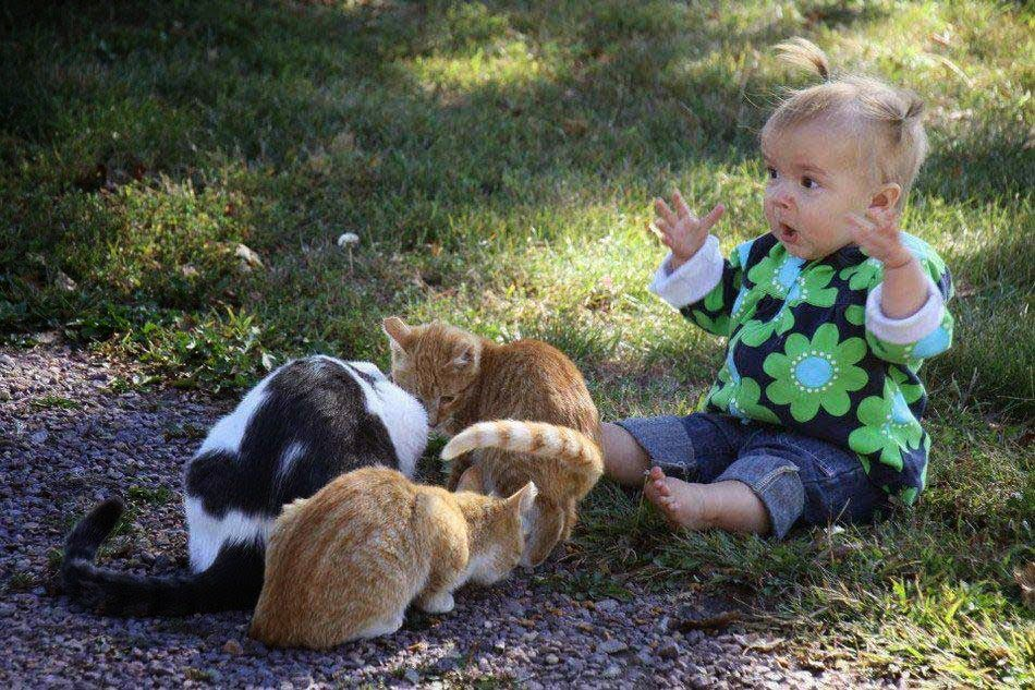 Surprised Child with Cats Love