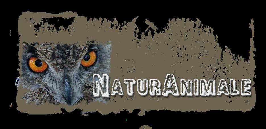 NaturAnimale