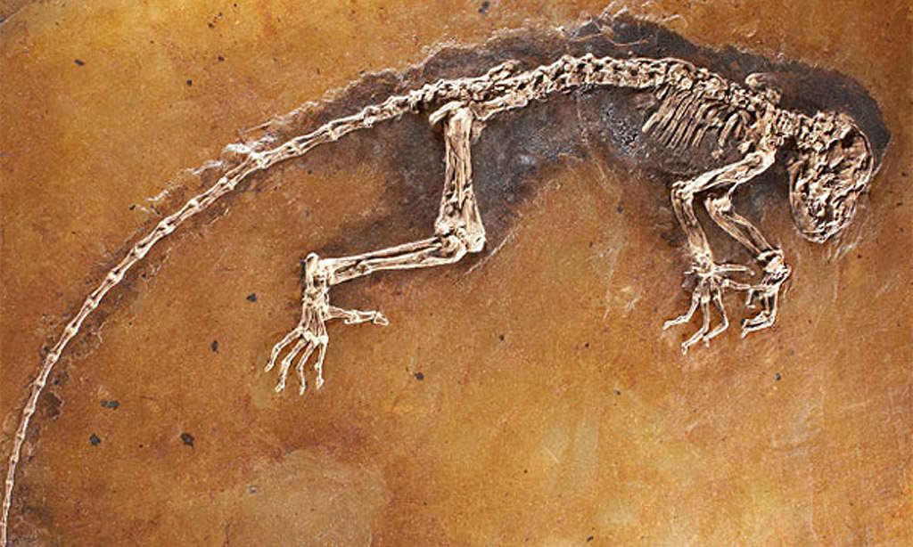 external image paleontologia.jpg