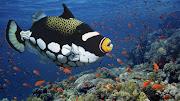 Se llaman animales acuáticos a los animales que viven en el agua durante . (www)