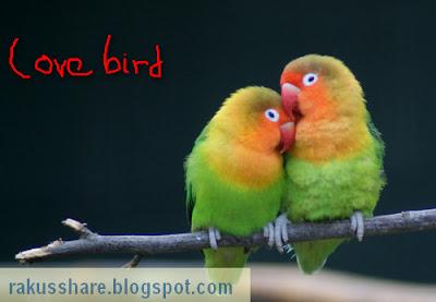 Download Suara Lovebird Masteran Ngekek Panjang Lengkap
