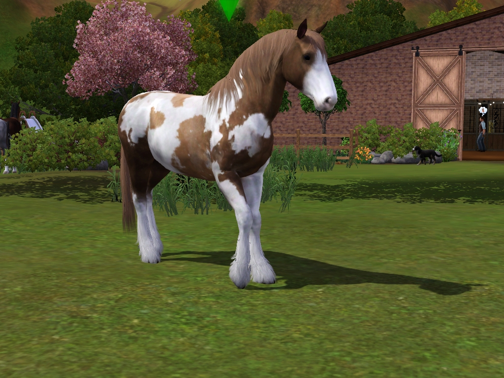 paint clydesdale - photo #1
