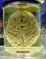 Brain Jar