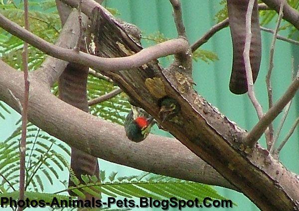 http://2.bp.blogspot.com/-c0t5iXqtia8/Tet3iRbDIOI/AAAAAAAABQA/U1VaKW2NQjc/s1600/woodpeckers_0004.JPG