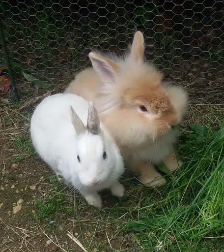 Lily e Kikko