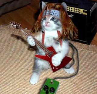 gato rockero rockstar