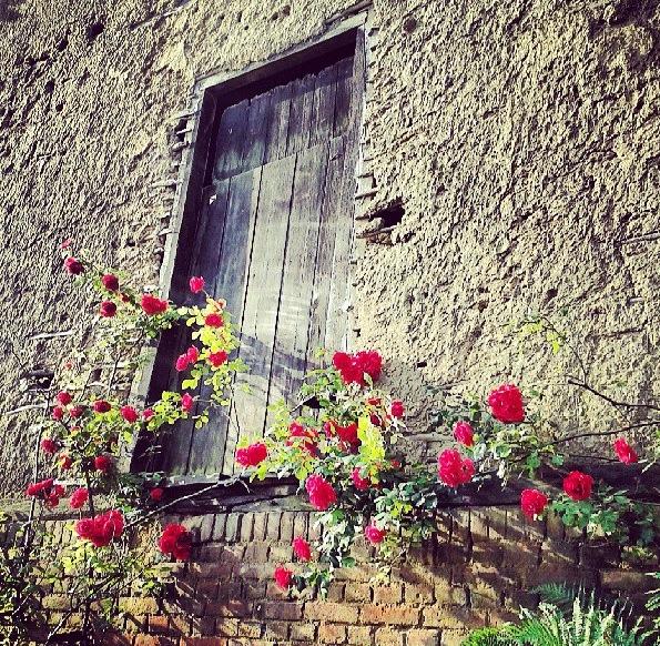 Mur en torchis Picardie