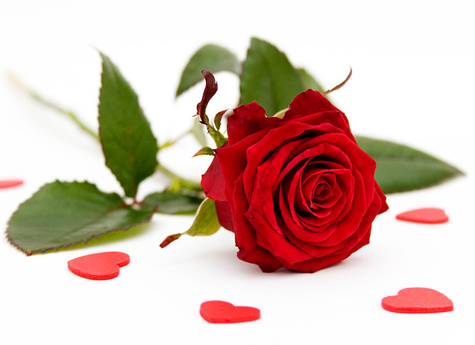 Beautiful Greetings with Single Red rose for lovers