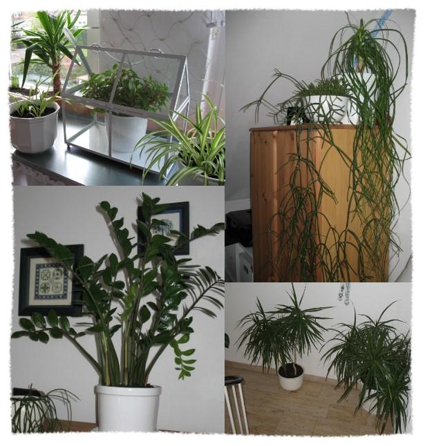 sammys kreative welt punkt 86 blumen umtopfen ableger einpflanzen pflanzen. Black Bedroom Furniture Sets. Home Design Ideas