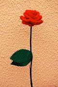 Rosa vermell intens de Sant Jordi: aquesta rosa també representa l'amor . (rosa vermella ok)