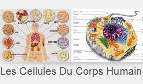 les cellules souches traitement