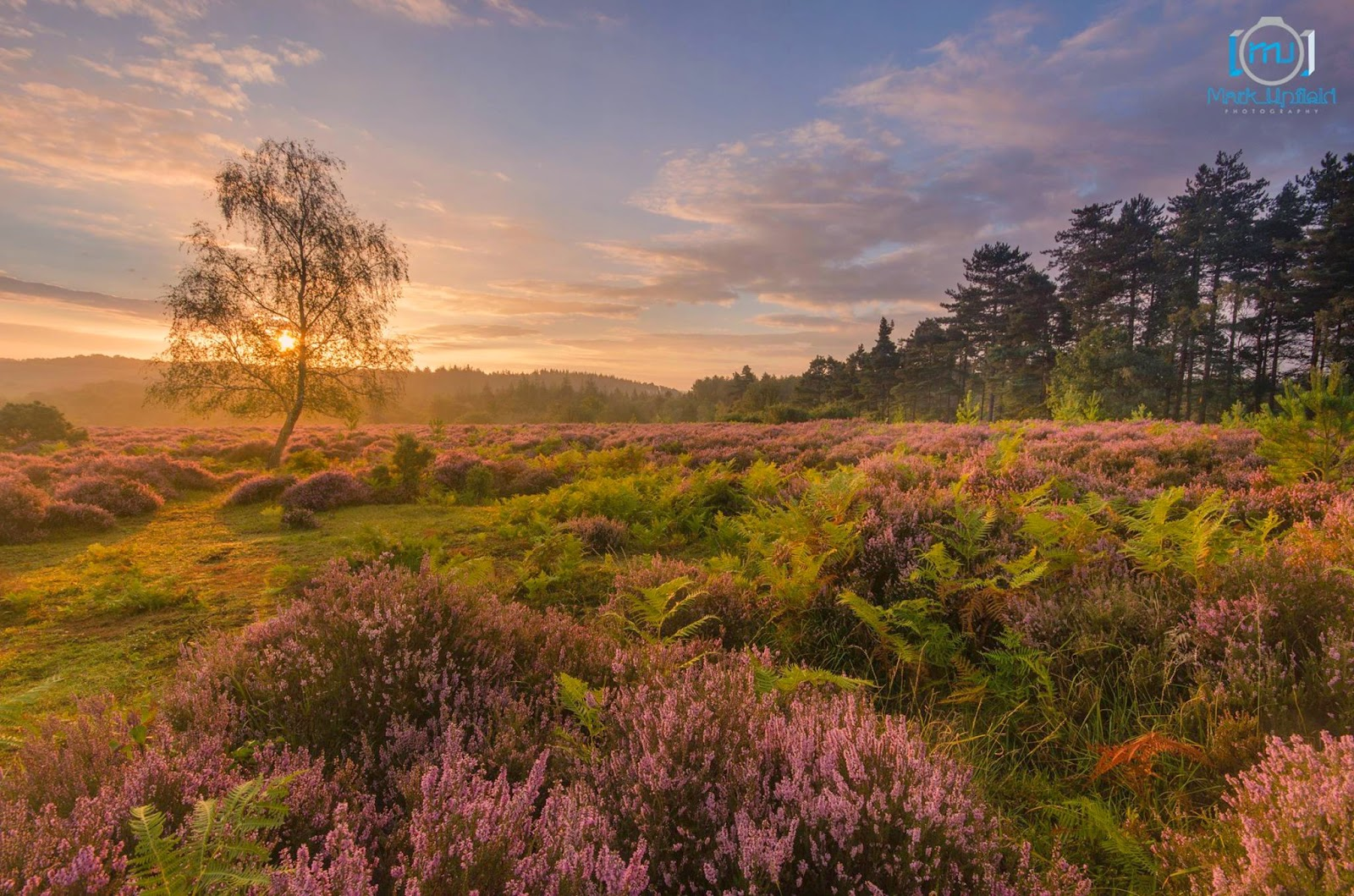 New Forest Scene by Mark Upfield
